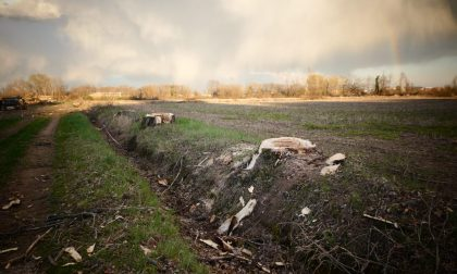 Taglio di cento alberi, il sindaco si scatena in Consiglio contro gli avversari politici