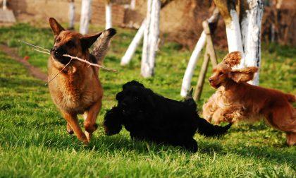 Comune finisce in Tribunale per i latrati dei cani