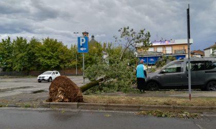 Bufera a Pontirolo, alberi divelti anche in centro FOTO