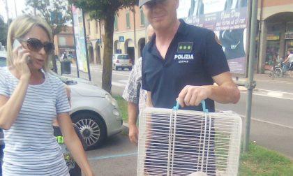 Gattino intrappolato in un'auto a Canonica, salvato FOTO