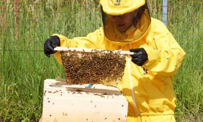 Ai lati della Teem nasce la Città delle api