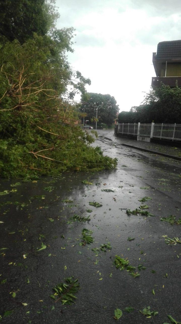 alberi caduti a lucino rodano dopo la tempesta