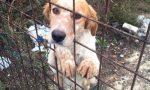 Abbandono di cani, Regione mette 1,2 milioni