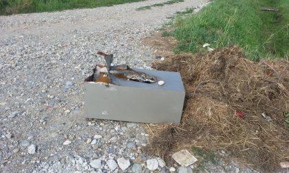 Cassaforte ritrovata in una strada campestre a Gessate