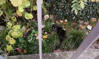 Gattino ferito salvo per miracolo cerca il suo padrone