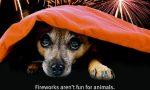 Botti di Capodanno: i consigli di Enpa su come proteggere gli animali