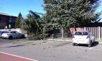 Vento forte, cadono gli alberi a Cernusco