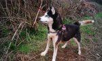 Cane abbandonato legato a un palo: salvato dai vigili