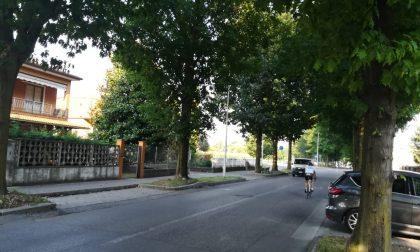 Cinquanta firme per chiedere al Comune di Cassano d'Adda di abbattere un viale alberato