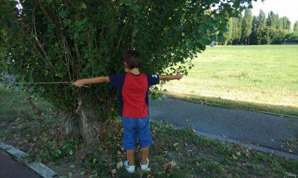 Manifestazione per salvare gli alberi a Peschiera FOTO