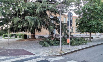 Cade un grosso ramo davanti alla scuola a Cernusco, nessun ferito