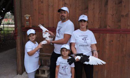 I piccioni viaggiatori allevati in Martesana
