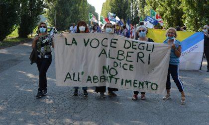 Nuova manifestazione contro l'abbattimento dei 240 pioppi FOTO