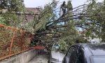 Crolla un albero alle elementari di Pioltello FOTO