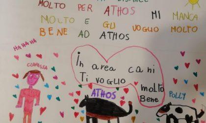 """Addio ad """"Athos"""", cane donatore di sangue: il commovente disegno di una bimba"""