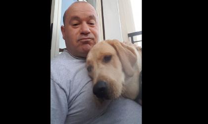 Cane labrador muore avvelenato: non aveva nemmeno un anno