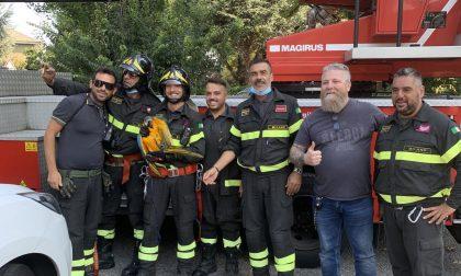 Pappagallo salvato dai Vigili del Fuoco all'ospedale di Melzo
