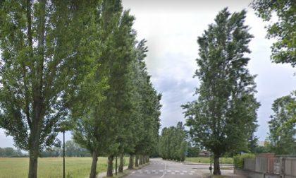 Presidio in via Galvani per evitare l'abbattimento di 240 pioppi cipressini a Peschiera