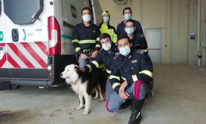 """Salvato cane in fuga """"per amore"""" sull'autostrada FOTO"""