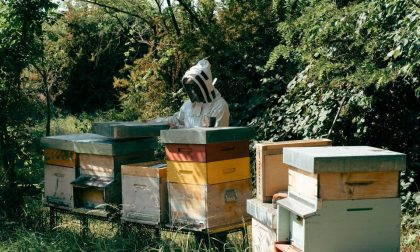Cernusco sul Naviglio vuole diventare Comune amico delle api