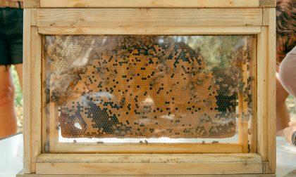 Salvate centomila api a Segrate FOTO