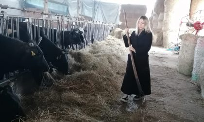 """Cassano, gli animalisti e una tentatrice di Temptation Island visitano le """"mucche del sindaco"""" FOTO"""