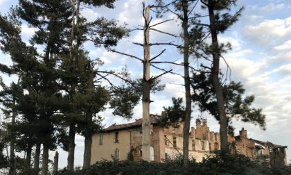 Verde in pericolo, a Cassano gli alberi della Sp104 sono a rischio crollo FOTO