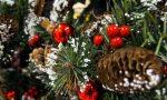 Natale a Segrate: l'accensione dell'albero in diretta VIDEO