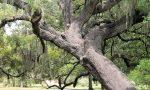 A Trezzo una giornata dedicata alla cura degli alberi monumentali