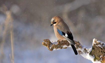 Arriva il freddo e forse anche una prima timida neve | Previsioni meteo