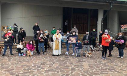 A Cassano animali… benedetti