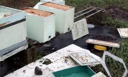 Ora i vandali se la prendono pure con le api: distrutte diverse arnie