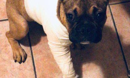 """""""Ugo"""" si rompe la gamba nell'area cani, ma nessuno risarcisce"""