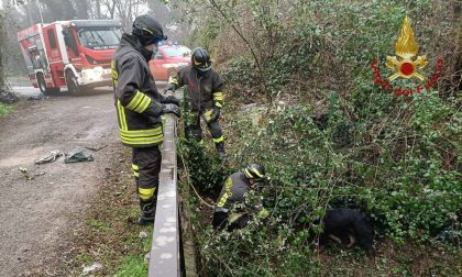 Cane salvato dai pompieri dopo essere caduto in un canale