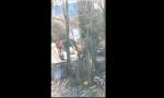 Grigliata abusiva fermata dai Carabinieri: spuntano fuori tirapugni e mazza da baseball