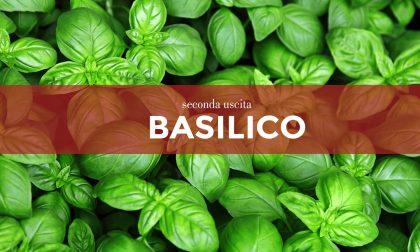 Tutti ortisti: da sabato 27 febbraio in edicola con Gazzetta della Martesana e Gazzetta dell'Adda i semi di basilico