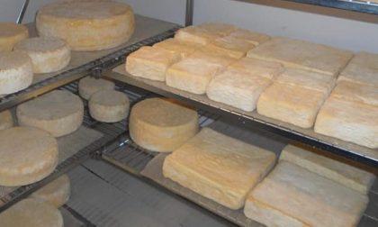 Attenzione alla formaggella bergamasca a rischio lysteria