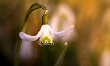 Assaggio di primavera: temperature fino a 18 gradi | Meteo Lombardia
