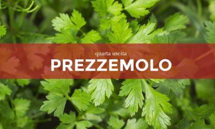 Facciamo l'orto in casa: da sabato 13 marzo con la Gazzetta della Martesana e la Gazzetta dell'Adda in regalo  i semi di prezzemolo