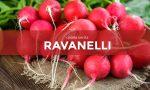 Da sabato 20 marzo in regalo con la Gazzetta della Martesana e la Gazzetta dell'Adda i semi di ravanello