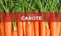 Da sabato 27 marzo in regalo con la Gazzetta della Martesana e la Gazzetta dell'Adda i semi di carota