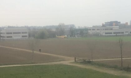 Giardiniere cade dall'albero, elisoccorso a Cassina