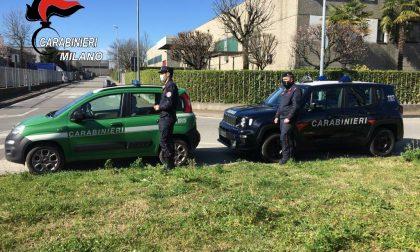 I Carabinieri soccorrono cinque gabbiani feriti a Trezzo