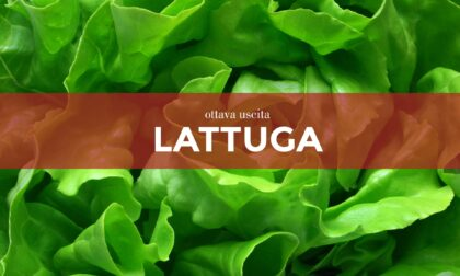 Da sabato 10 aprile con la Gazzetta della Martesana e la Gazzetta dell'Adda in regalo i semi di lattuga