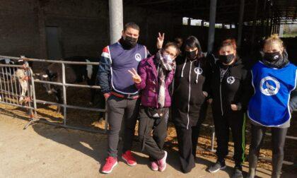 Le ultime mucche del sindaco lasciano Cassano d'Adda