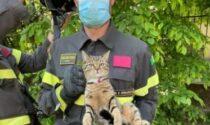 Gatto bloccato su un albero e salvato dai Vigili del fuoco