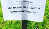 """""""Bambini piantumati"""": l'ironia di Cristiano Militello su Cassano"""