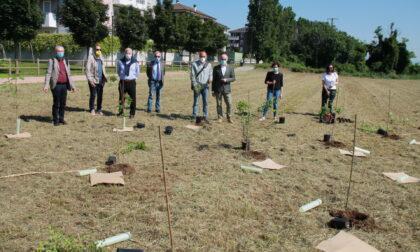 """Con Forestami 1.500 piante in più a Melzo. Nasce  la nuova """"Tangenziale verde"""""""