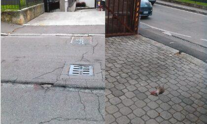 Ancora topi in centro: è allarme roditori a Melzo