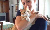 Allarme per un sadico che avvelena i gatti